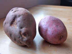 A half sweet potato and single red potato were the kitchen castoff ingredients to make a potato hash.