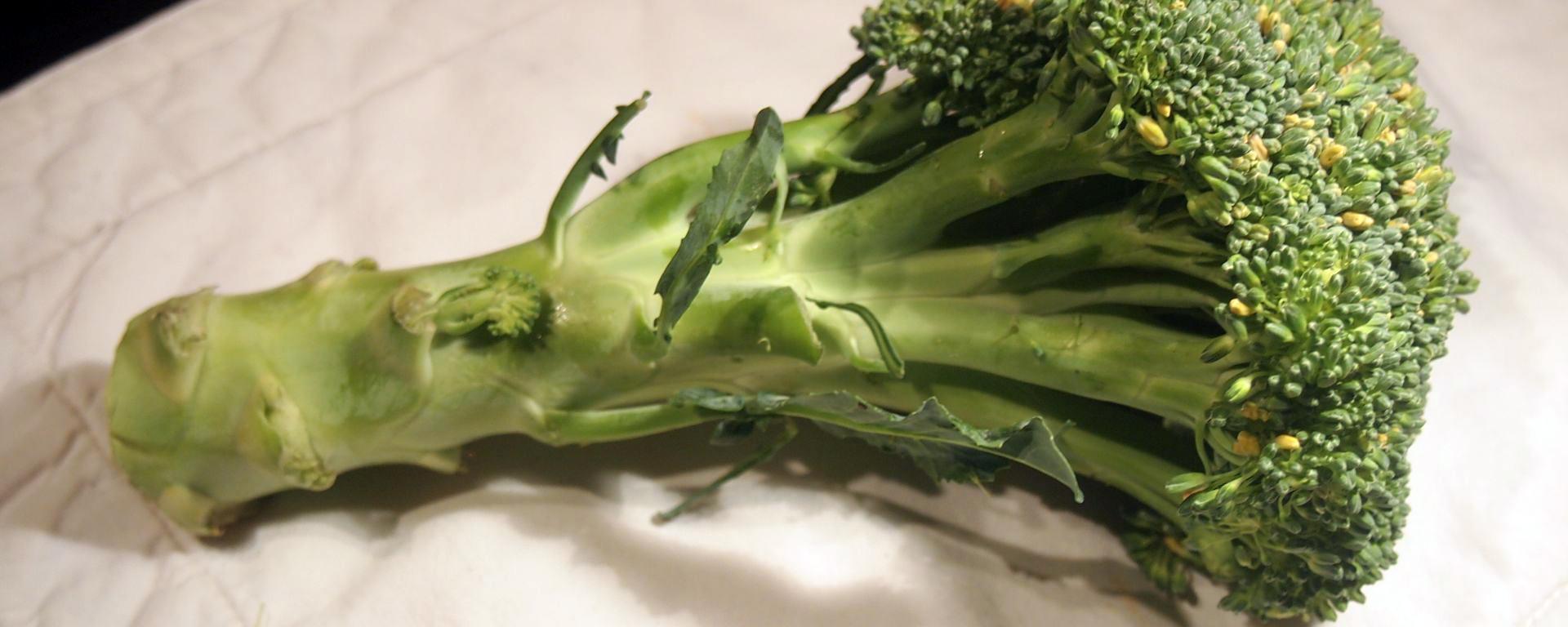 Stalk of broccoli