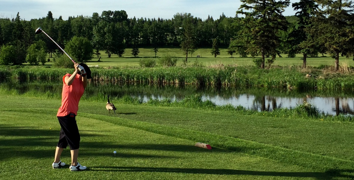 The resident goose keeps a close eye on Sunny's tee shot during a round a J.R. Golf Club near St. Albert.