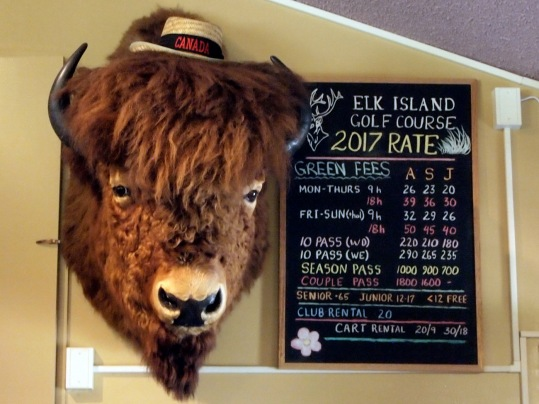 """After you enter the park from Highway 16, there is a short """"Bison Loop"""" where you might see the buffalo roaming. We haven't seen any there yet. But there is this cheerful fellow in the clubhouse."""